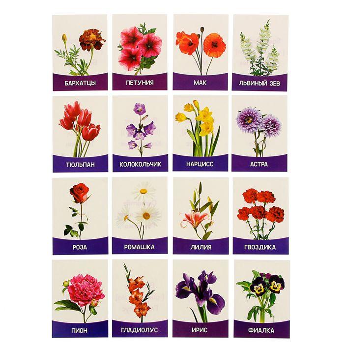 Для для, садовые цветы картинки с названиями детский сад